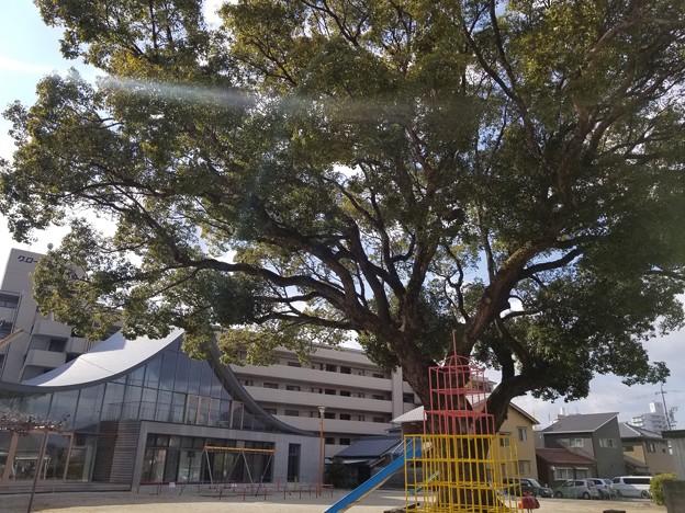 写真: 古からの木