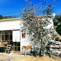 写真: 山里の食堂