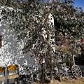 写真: 白い壁と椅子