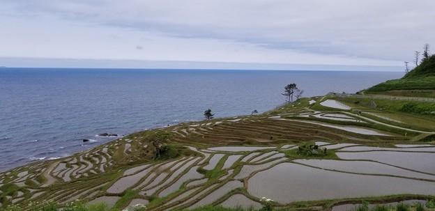 写真: 日本海の棚田
