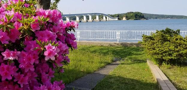 写真: つつじに架かる橋
