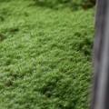 写真: ふさふさの癒しカーペット