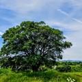 写真: この木なんの木