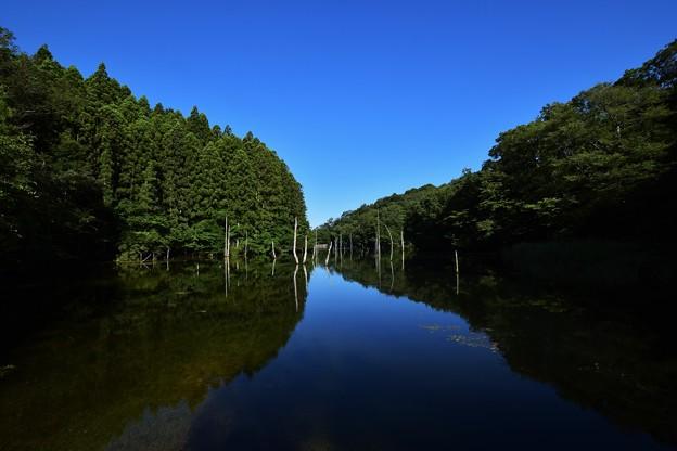 瀬戸大正池