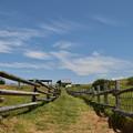 写真: 空に近い牧場