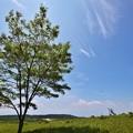 写真: 高原の空