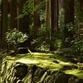 写真: 木漏れ日を浴びる