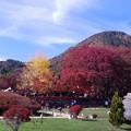 写真: 紅葉真っ盛り