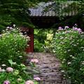 あじさい寺の風景