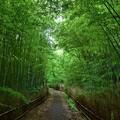 緑の世界へ