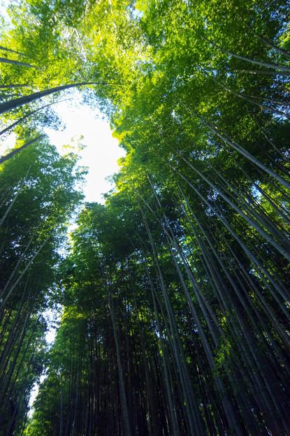嵯峨嵐山・竹林の小径