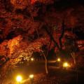 紅葉夜景2