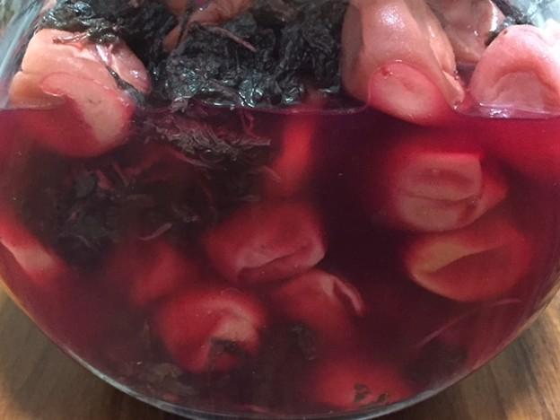 梅しごと2018 梅漬け