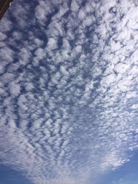 巻積雲 (うろこ雲)さ2018.11.1