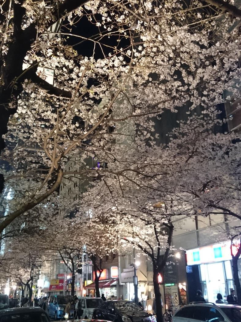 八重洲の桜 2016
