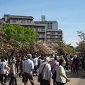 造幣局 桜の通り抜け 2018 (1)
