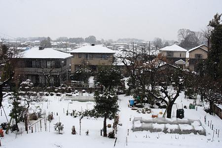埼玉の雪景色
