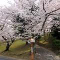 写真: 春の岐路