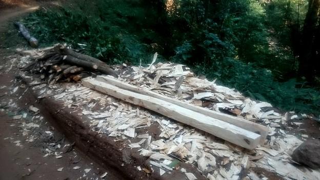 木を倒して、その場で柱にしてしまいます!