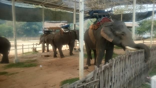Kok川の上流のエレファントキャンプ(象舎)です