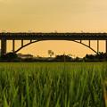 Photos: 夕暮れの鉄道橋