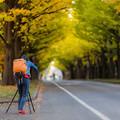 Photos: 北大金葉並木
