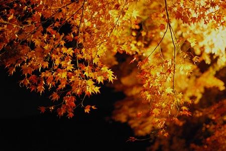 香嵐渓の葉