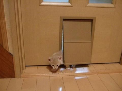 コゾと猫ドア