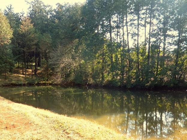 森の南にある池