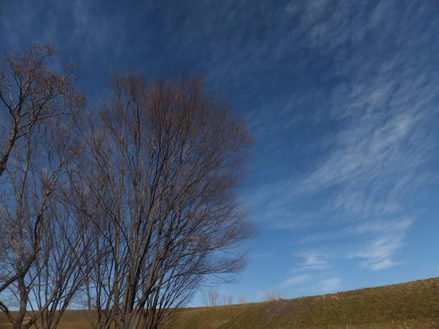 秋ケ瀬の空