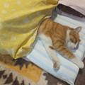 Photos: コゾが寝てます