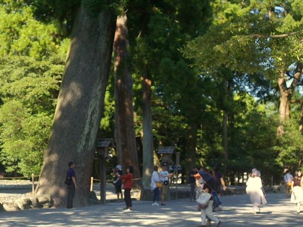 巨木の多い森