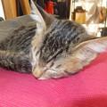 Photos: 猫の句