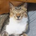 Photos: 野良猫の一句