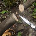 ミズキの枝を発見