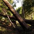台風の倒木