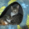 Photos: コゾ猫