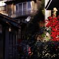 居酒屋の並ぶ柳小路