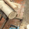 枇杷の木を入手