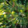 写真: 繊細にグリーン