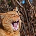 写真: 虫歯はない!でも牙が・・・