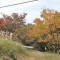 Photos: 富幕山山頂桜の黄葉