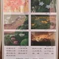 Photos: 第8回紫陽花の会  花・写真展