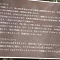 Photos: 東明桜について