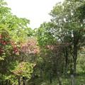 写真: 浜松市北区引佐町渋川つつじ公園