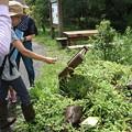 Photos: 先日の森林公園 自然いきものかんさつ隊
