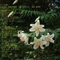 歌:松あおい 『秋葉旅情』作詞:林京司 作曲:泉谷むつみ 編曲:富塚章