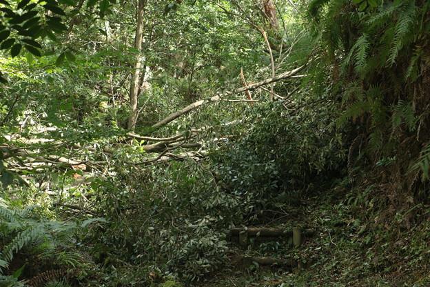 森林公園台風24号爪痕