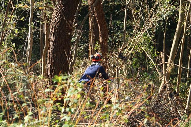 長野県安曇野から来て湖西の宿舎より来たと言ってました。富幕山山頂の木を一人で切っています。山頂からの見晴らしも良くなるでしょう