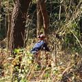 Photos: 長野県安曇野から来て湖西の宿舎より来たと言ってました。富幕山山頂の木を一人で切っています。山頂からの見晴らしも良くなるでしょう